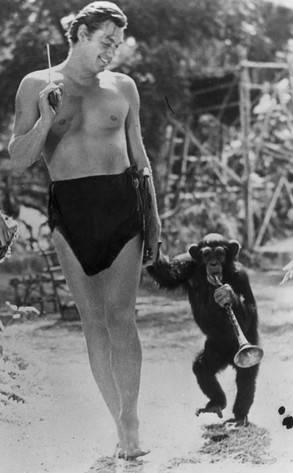 reg_293.chimp.cm.122811.jpg