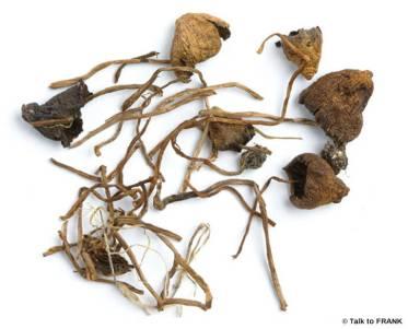 FRANK_drug_image_mushrooms.jpg